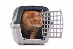 transportin-gato