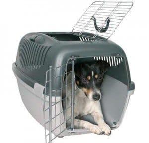 transportin-perro