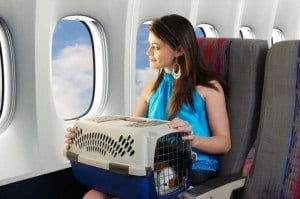 transportin-perro-avion